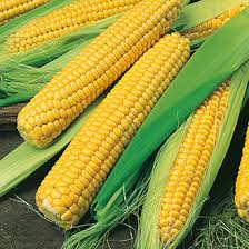 Natural Sweet Corn