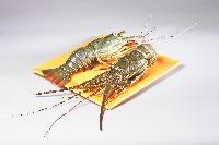 Whole Raw Rock Lobster
