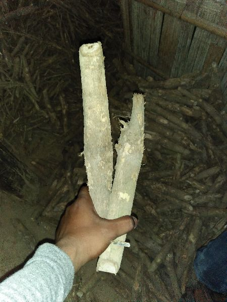 Indian Teak Stump