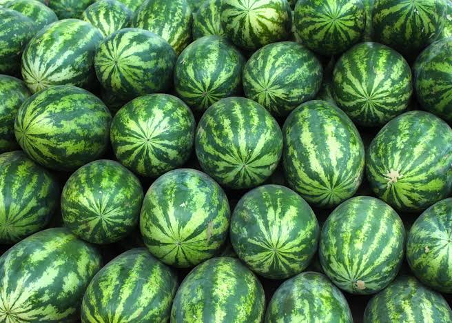 Fresh Watermelon 04