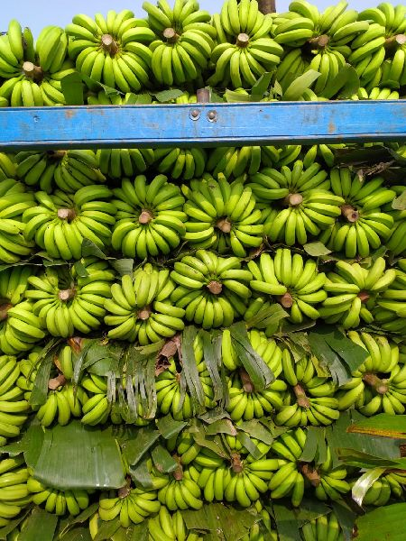 Fresh Green Banana 01
