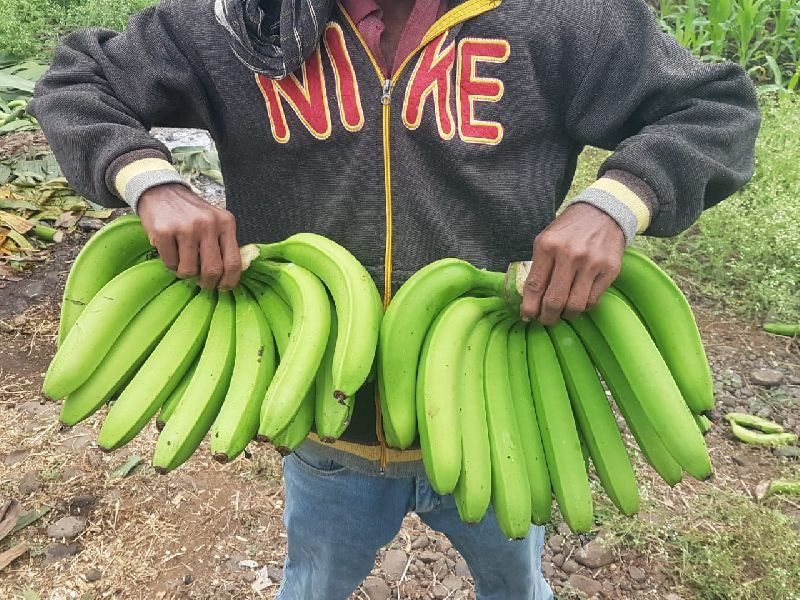 Fresh Green Banana 02