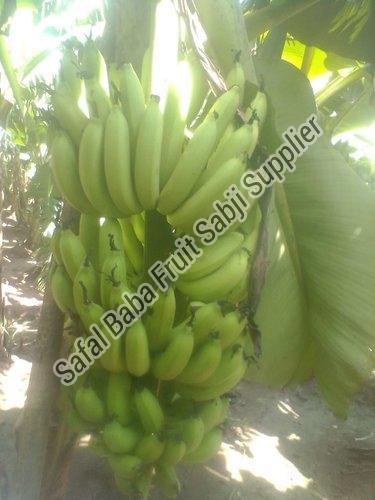 Fresh Green Banana 06