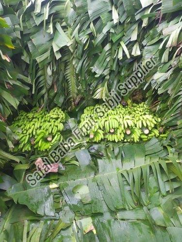 Fresh Green Banana 08