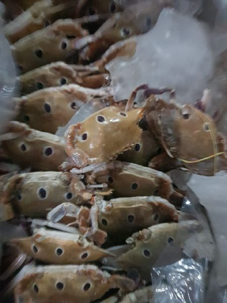 Frozen Three Spot Crab