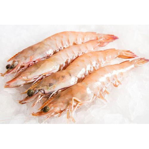 Shrimp Fish