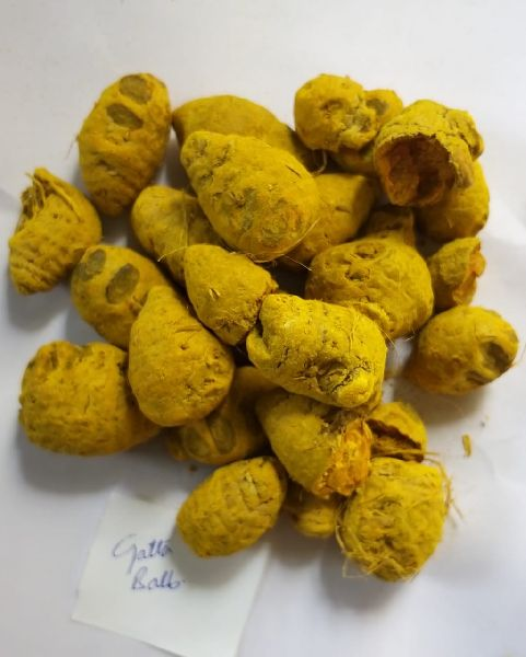 Turmeric Bulbs