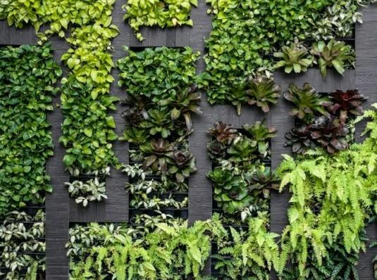 Outdoor Vertical Garden Wall