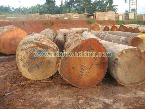 Doussie Wood Logs