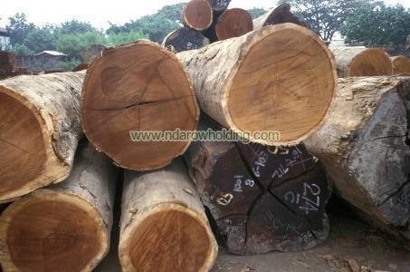 Iroko Wood Logs