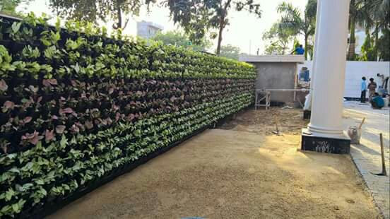 Vertical Garden Plants