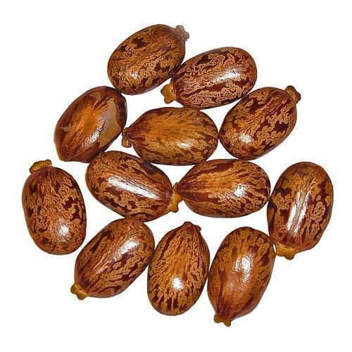 Brown Castor Seeds