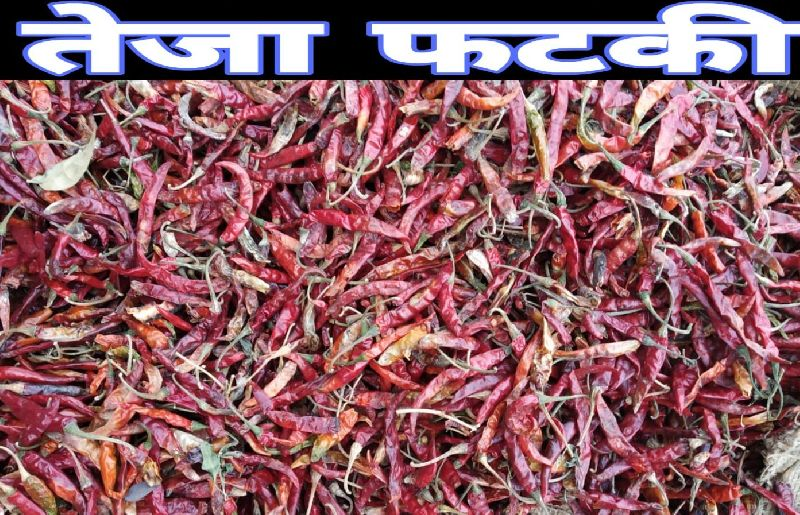 Teja Fatki Dried Red Chilli