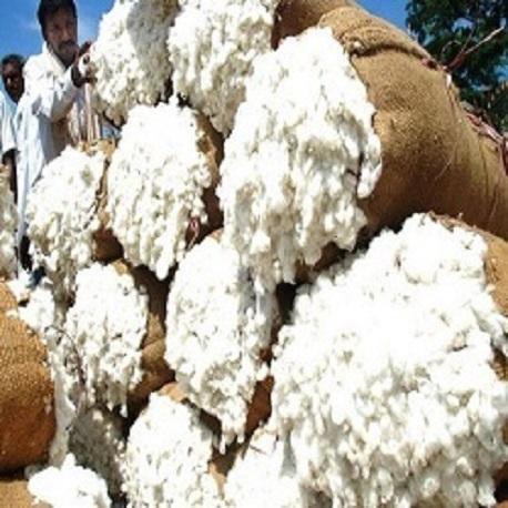 Organic Raw Cotton - Manufacturer Exporter Supplier in
