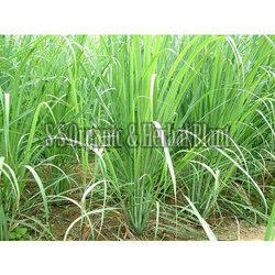 Natural Lemongrass
