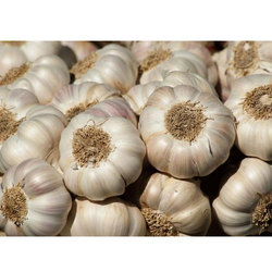 Indian Garlic