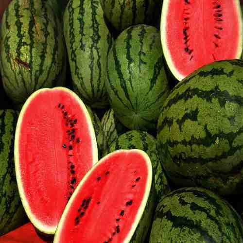 Indian Watermelon