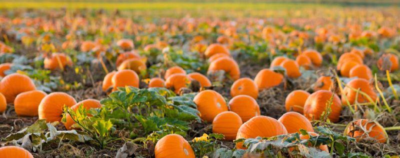 Natural Pumpkin