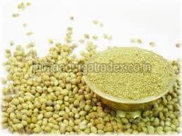Fresh Organic Coriander Powder