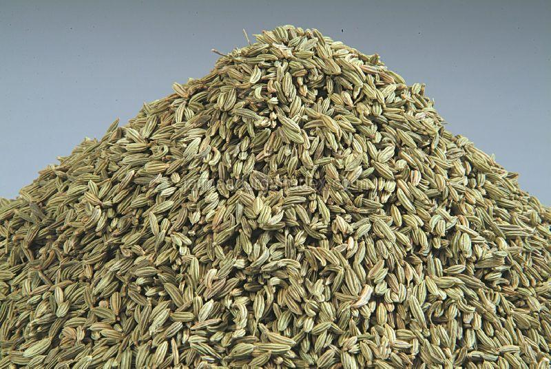 Fresh Organic Fennel Seeds