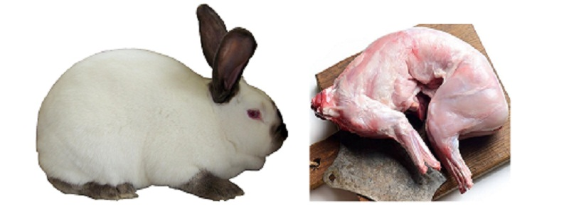 Fresh Rabbit Meat