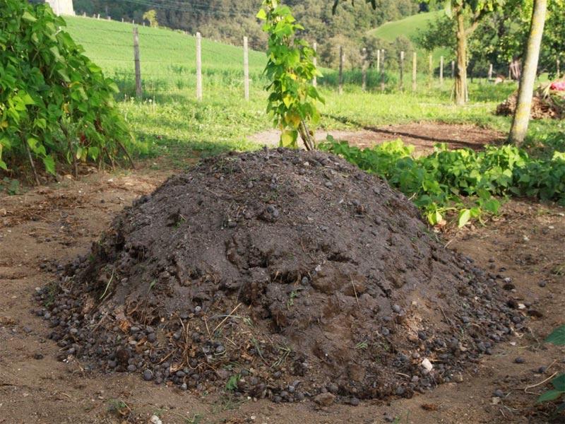 Pure Cow Dung Fertilizer