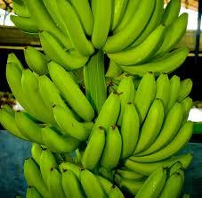 Fresh Organic Green Banana