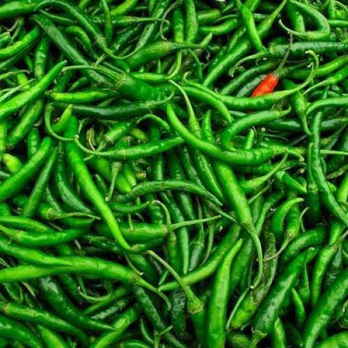 Fresh Organic Green Chilli