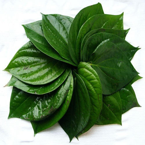 Natural Betel Leaves