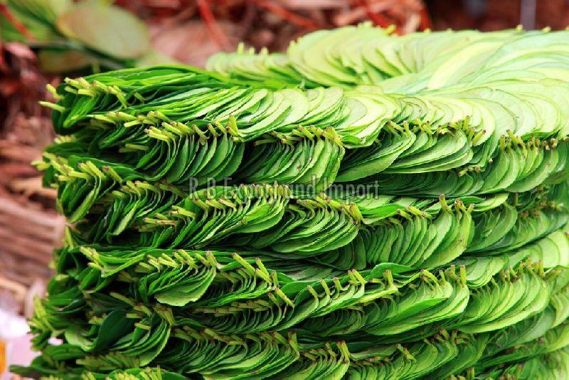 Organic Betel Leaves
