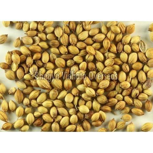 Dried Coriander Seeds