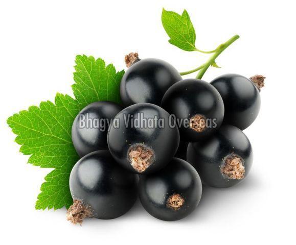 Fresh Black Currant