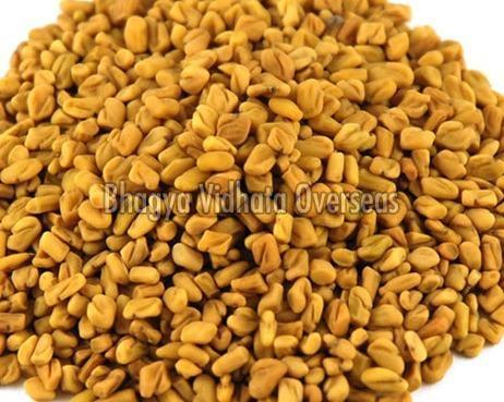 Fresh Fenugreek Seeds