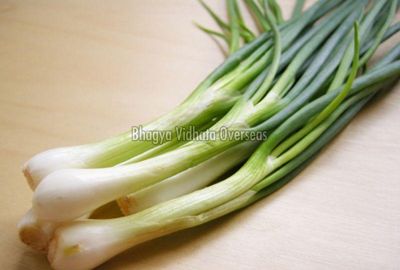 Fresh Spring Onion