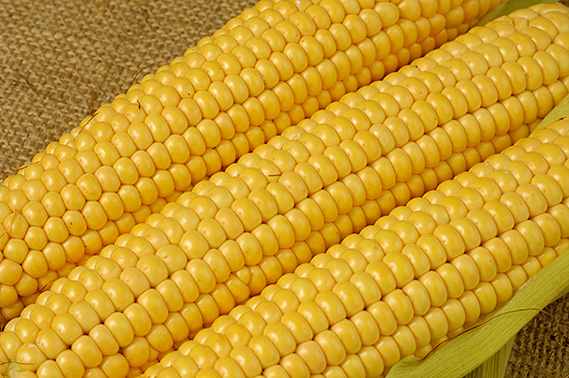 Fresh Yellow Maize