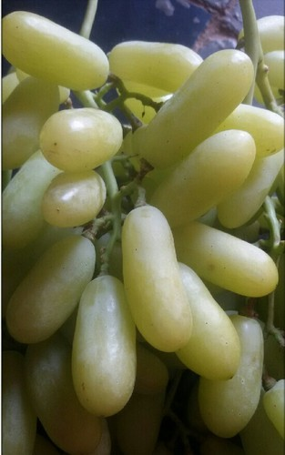 Long Green Grapes
