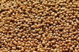 Raw Coriander Seeds