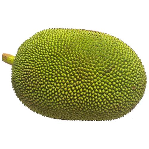 Natural Jackfruit