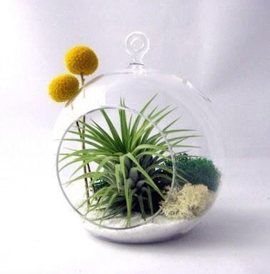 Borosilicate Glass Terrarium 03