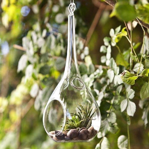 Borosilicate Glass Terrarium 04