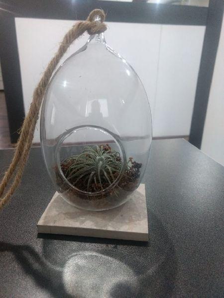 Borosilicate Glass Terrarium 09
