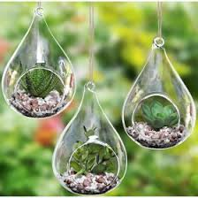 Borosilicate Glass Terrarium 18