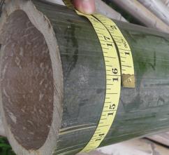 Assam Bamboo Pole