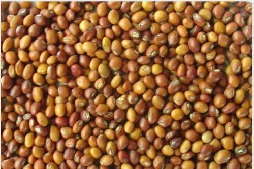Organic Toor Seeds
