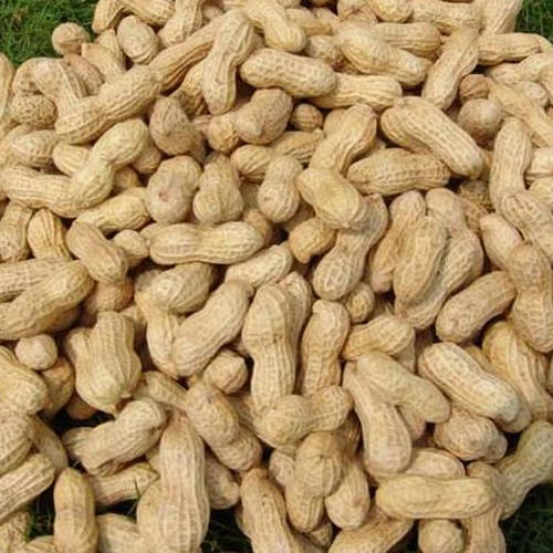 Whole Groundnuts