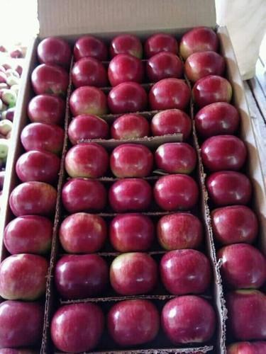 Fresh Organic Shimla Apple