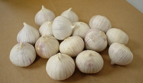 Fresh Solo Garlic