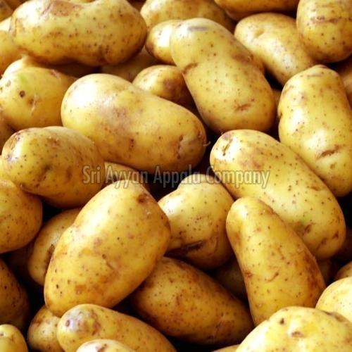 Fresh Big Potato