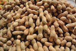 Loose Form Groundnut