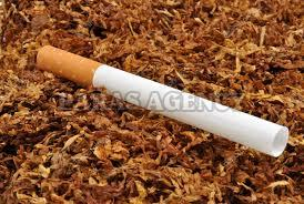 Wholesale Filter Cigarette Supplier,Filter Cigarette
